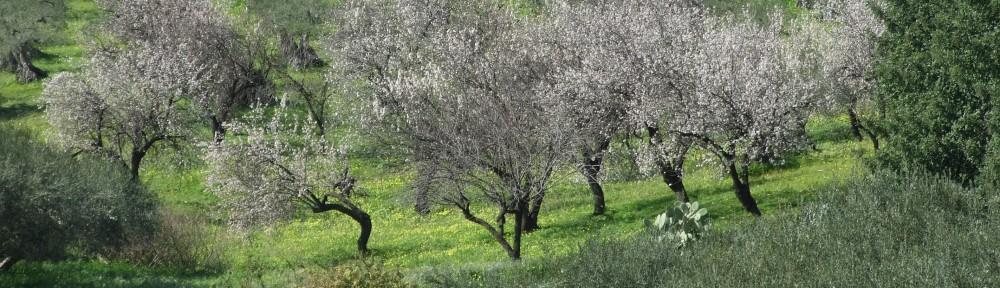 Olivenöl & Wein